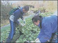 県下5ヵ所で実りの学習農園