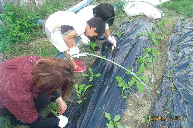 自分たちで作った野菜で苦手野菜を克服